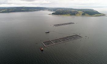 Con medios aéreos Marine Harvest refuerza búsqueda de salmones