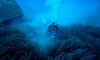 Moving fish farms boosts seagrass meadows