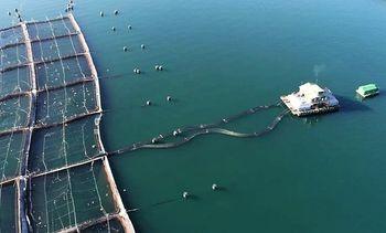 Aquachile afirma que no ha habido escape de peces desde centro de cultivo Punta Pelu