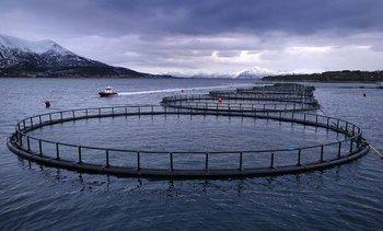 Knallår for Nordlaks - tar 400 millioner i utbytte