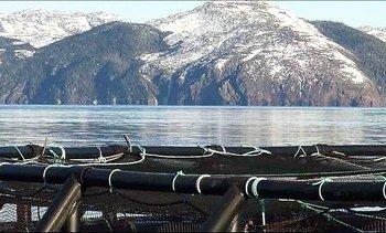Marine Harvest invertirá US$39 millones en hatchery de Terranova
