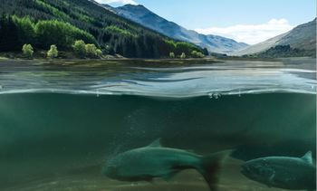 Wind power company gives £300,000 to wild salmon tracking project