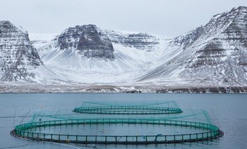Iceland considers ending unlimited fish farm licences
