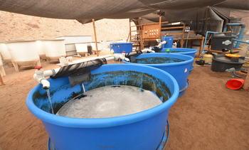 Salmonicultura estará presente en VII Congreso de Acuicultura
