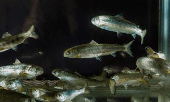 Ny bok om fiskevelferd er nå ute