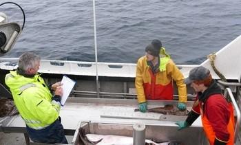 Havforskningsinstituttet utvider kystreferanseflåten