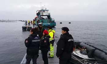 Marine Harvest: Recaptura directa e indirecta de salmones escapados alcanzó 27,3%