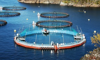 Cermaq Canada plans smolt-to-harvest closed cage trial