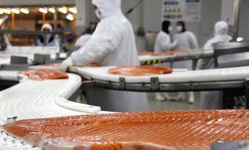 Cermaq Chile continúa liderando exportaciones de salmón