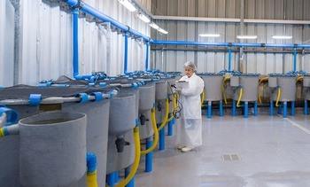 En Chile: Evalúan eficacia de alimentos funcionales contra SRS