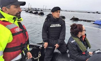 Marine Harvest charged over massive escape in Chile