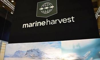 Marine Harvest lanza estrategia de marca y anuncia cambio de nombre