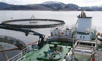Sjømat Norge tar rekebestandene på alvor