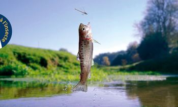 Insect-fed trout go on sale in 52 French stores