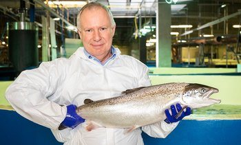 Can Pure Salmon change the game for RAS grow-out?