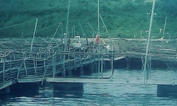 Los Lagos: Activan plan de contingencia por eventual escape de peces