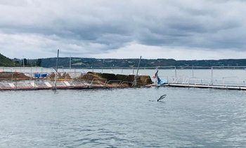 Chile: Salmon farmer admits escape of nearly 27,000 fish