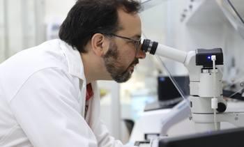 Nuevo modelo de bajo costo para el estudio de infección por Caligus