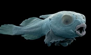 Fiskehelserapporten 2018: - Flere sykdommer holder laksedødeligheten høy