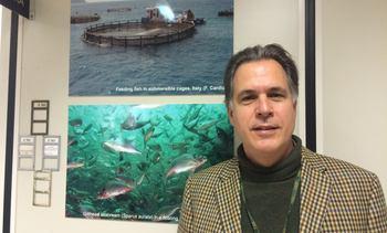 """""""Debe crearse un mercado interno real para el salmón chileno"""""""