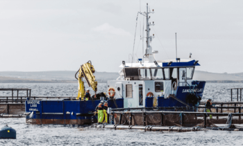 Salmon farmer spending £3m with Scottish firms to equip Scapa Flow site