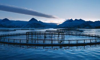 Cermaq to make salmon even more climate friendly