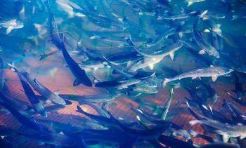 Fiskeslam kan bli gode gjødselprodukter