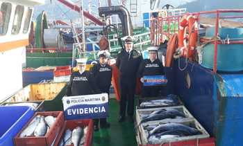 Chile: Biggest seizure of stolen salmon in 10 years