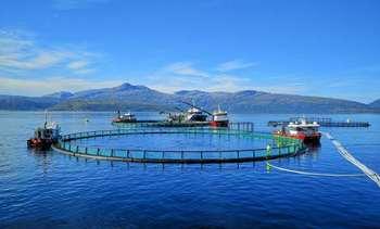 Noruega: FAN se encontraría bajo control