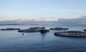 Scaling up IoT in aquaculture could be key to sector success