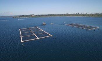Los 77 centros de salmón que trabajan para ser libres de antimicrobianos