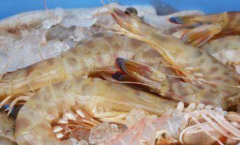 Coming to restaurants soon: Scottish warm-water shrimp