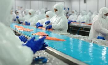 Caleta Bay busca procesar 100% de su producción en plantas propias