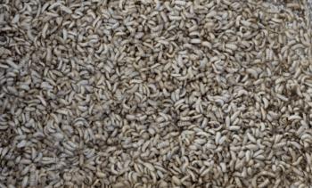 Cargill alcanza acuerdo con productor de harina de insectos