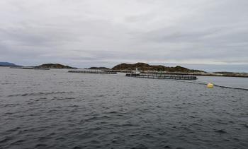 To skritt frem og ett steg tilbake for Finnøy Fisk