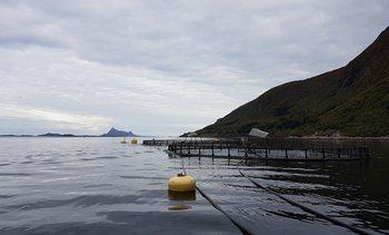 Selsøyvik Havbruk styrker seg