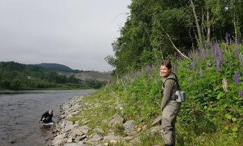 Storlaksen venter i elvene