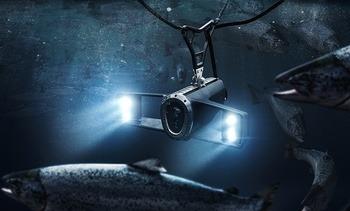 Lanzarán cámara hiperespectral para conteo automático de piojos de salmón