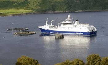 Mowi envía salmón directamente a Dinamarca por sobreprocesamiento