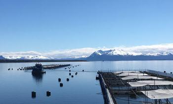 ¿Cómo lograr una industria del salmón sustentable en Magallanes?