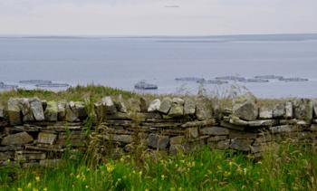 Salmon farmer gets green light for green homes