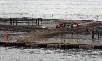 Corte Suprema confirma rechazo a demanda por accidente en centro de salmón
