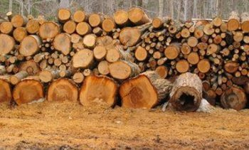 Positive trial results for wood-based aquafeed