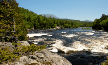 Cooke helps wild salmon restoration in Maine