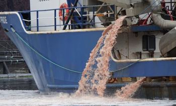 Newfoundland fish die-off costs Mowi €5 million