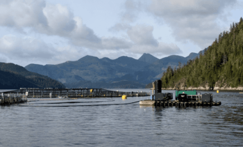 PRV was in Canada before salmon farming, says fish vet