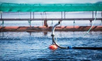 Mineraltilskot har effekt både på fisk og miljø