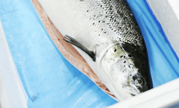 Norway sets new October seafood export value record