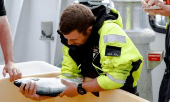 Productores escoceses de salmón reducen 60% uso de antibióticos