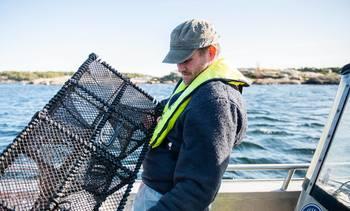 Leppefiskteiner uten agn kan løse torskegåten
